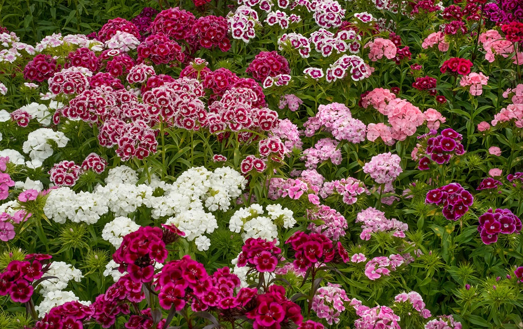 Don't plant all annuals.